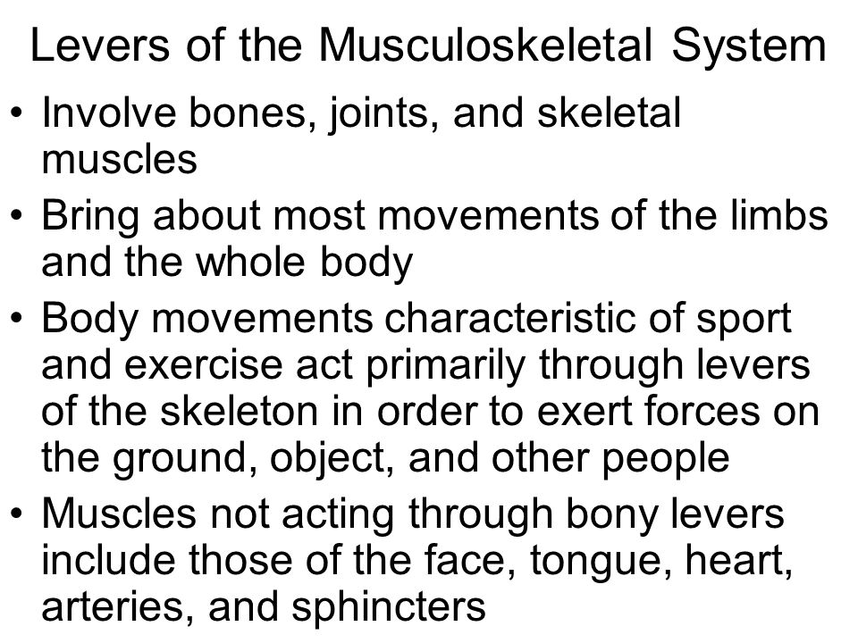 Levers of the Musculoskeletal System