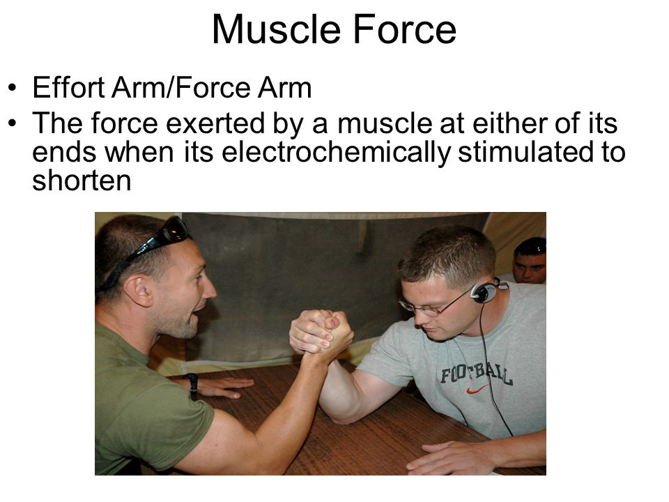 Muscle Force Effort Arm/Force Arm