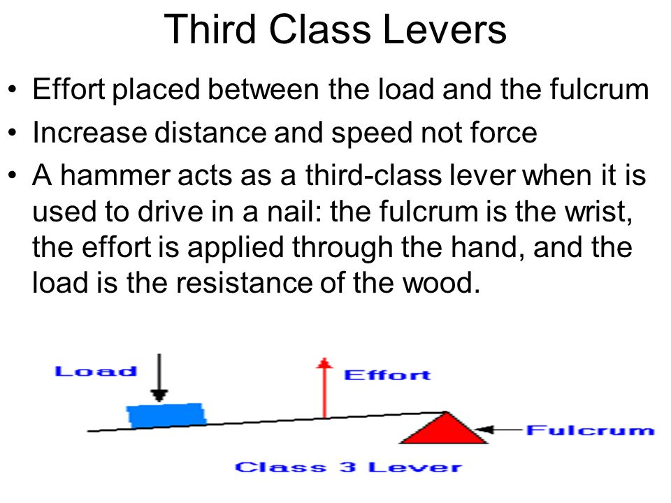 Third Class Levers Effort placed between the load and the fulcrum