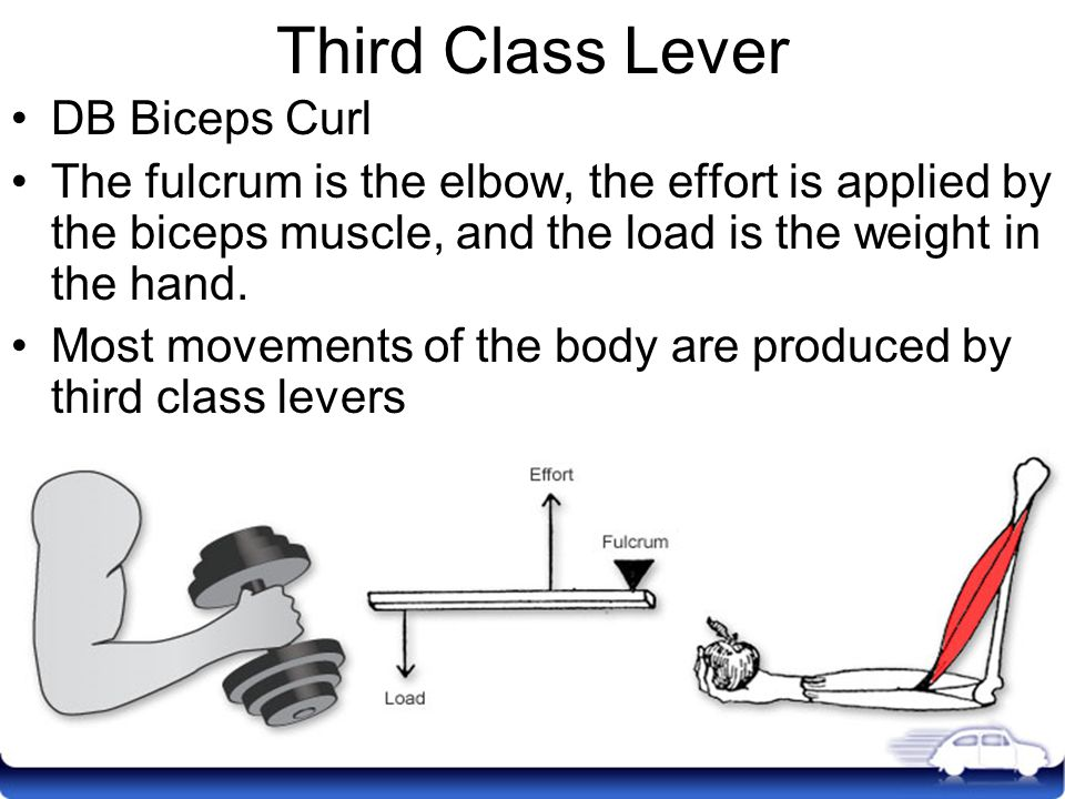 Third Class Lever DB Biceps Curl