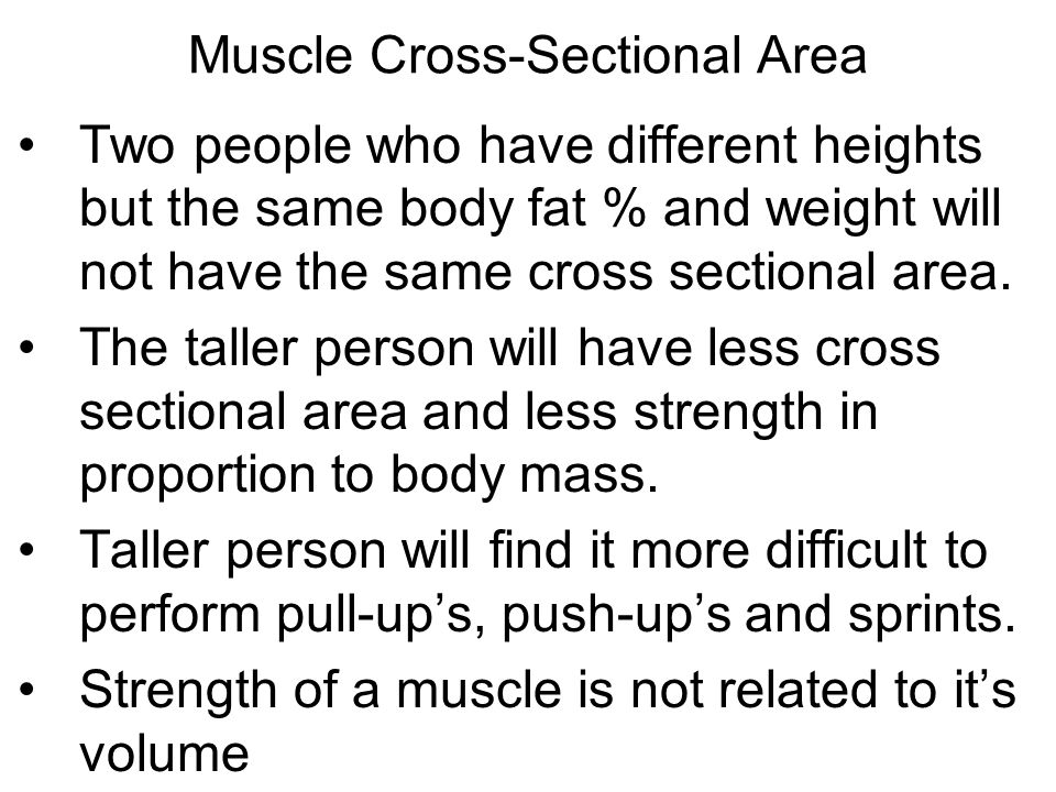 Muscle Cross-Sectional Area