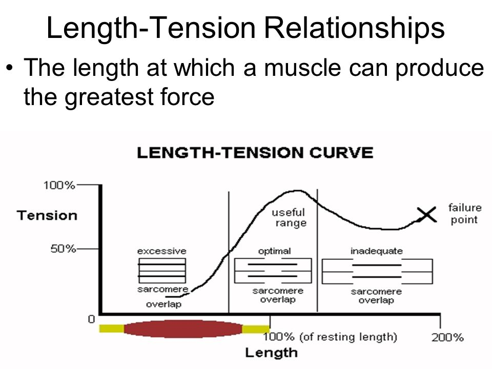 Length-Tension Relationships