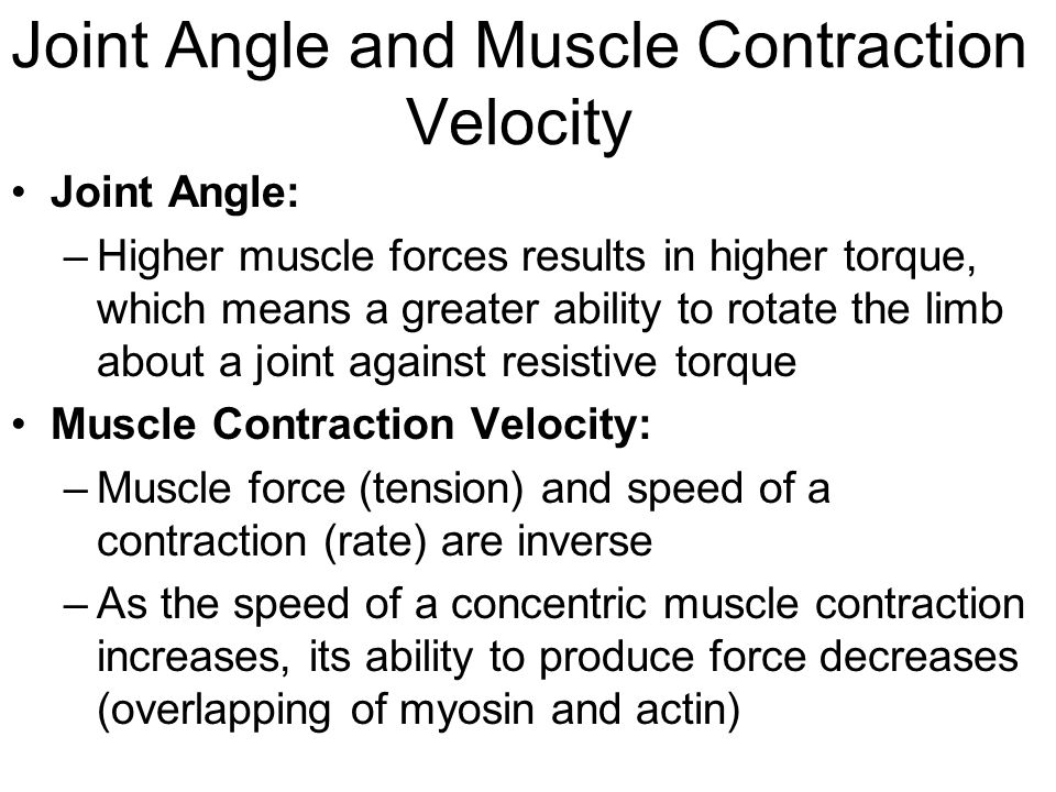 Joint Angle and Muscle Contraction Velocity