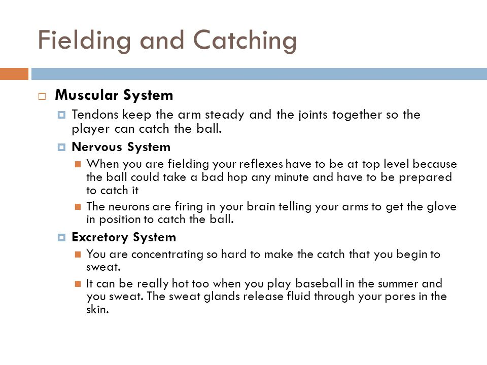Fielding and Catching Muscular System