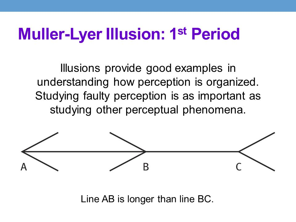Muller-Lyer Illusion: 1st Period