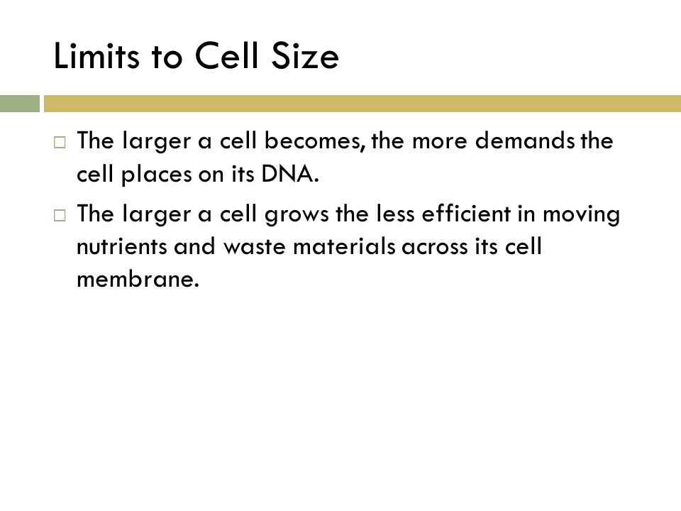 Limits to Cell Size The larger a cell becomes, the more demands the cell places on its DNA.