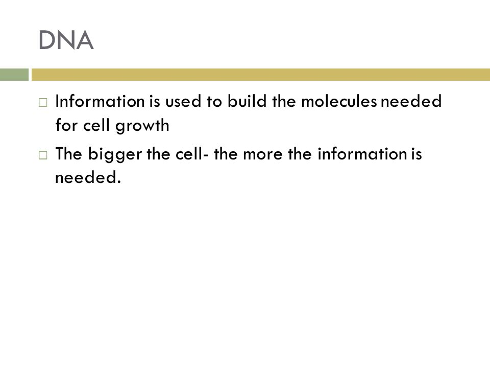 DNA Information is used to build the molecules needed for cell growth