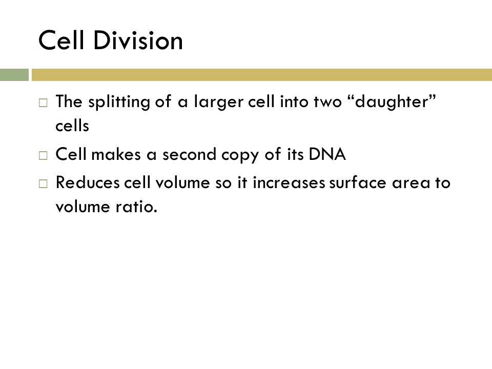 Cell Division The splitting of a larger cell into two daughter cells