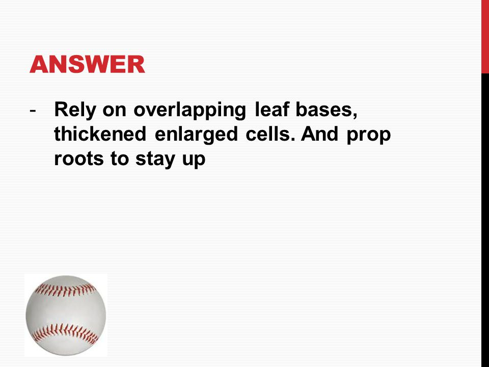 Answer Rely on overlapping leaf bases, thickened enlarged cells. And prop roots to stay up HOME