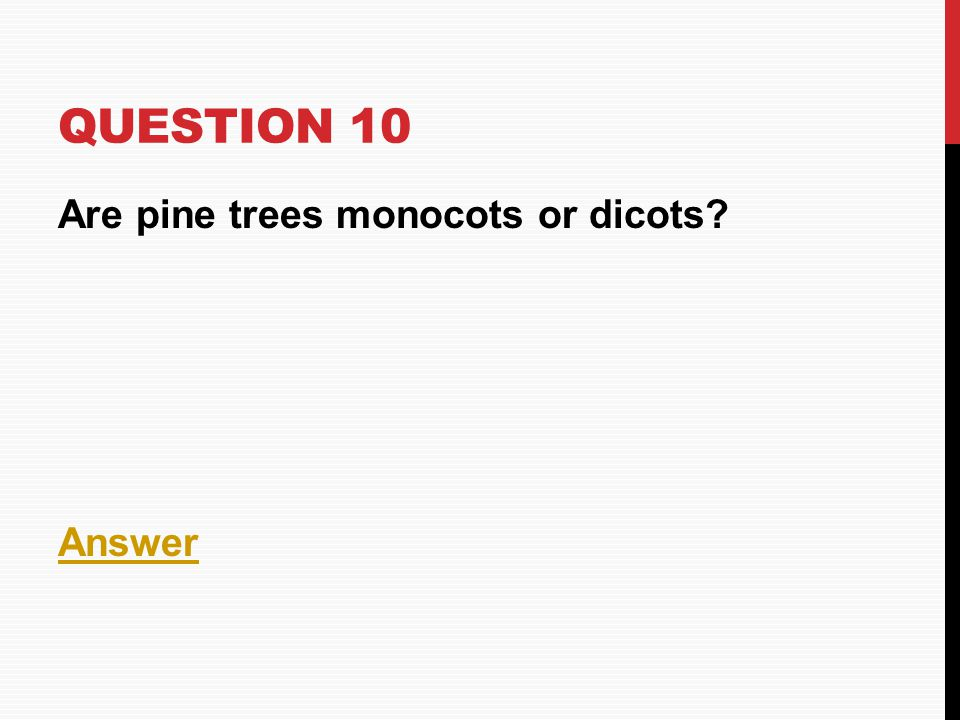 Question 10 Are pine trees monocots or dicots Answer