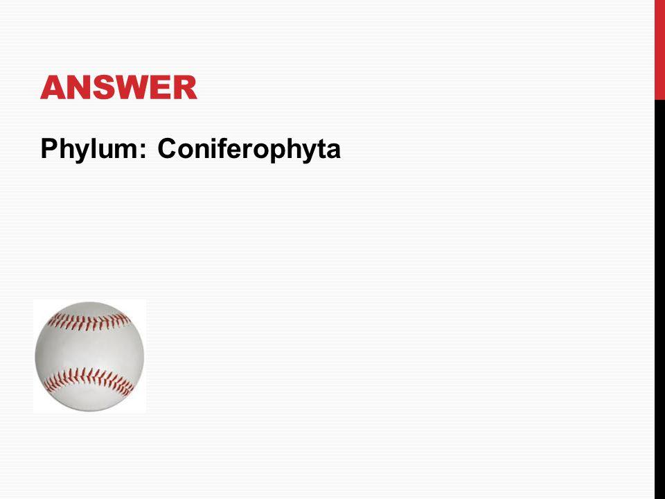 Answer Phylum: Coniferophyta HOME