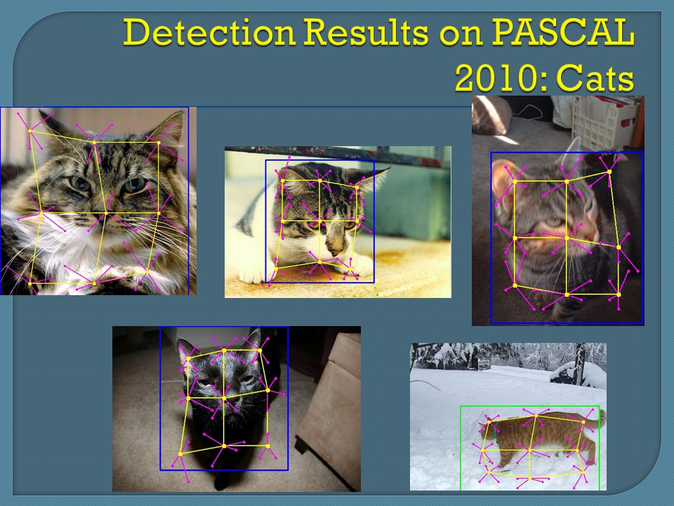 Detection Results on PASCAL 2010: Cats