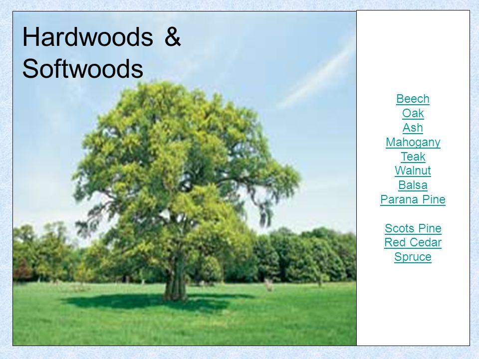 Hardwoods & Softwoods Beech Oak Ash Mahogany Teak Walnut Balsa