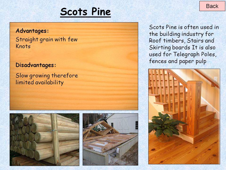 Back Scots Pine.