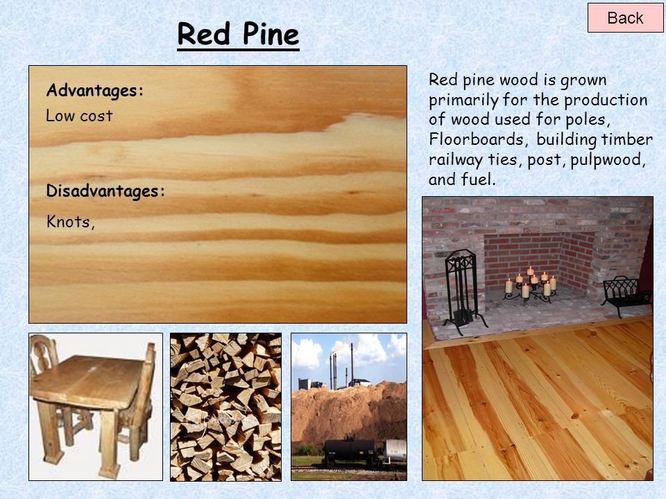 Back Red Pine.