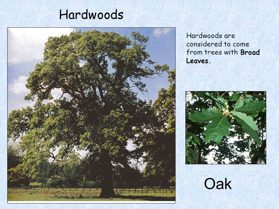 Hardwoods Hardwoods are considered to come from trees with Broad Leaves. Oak