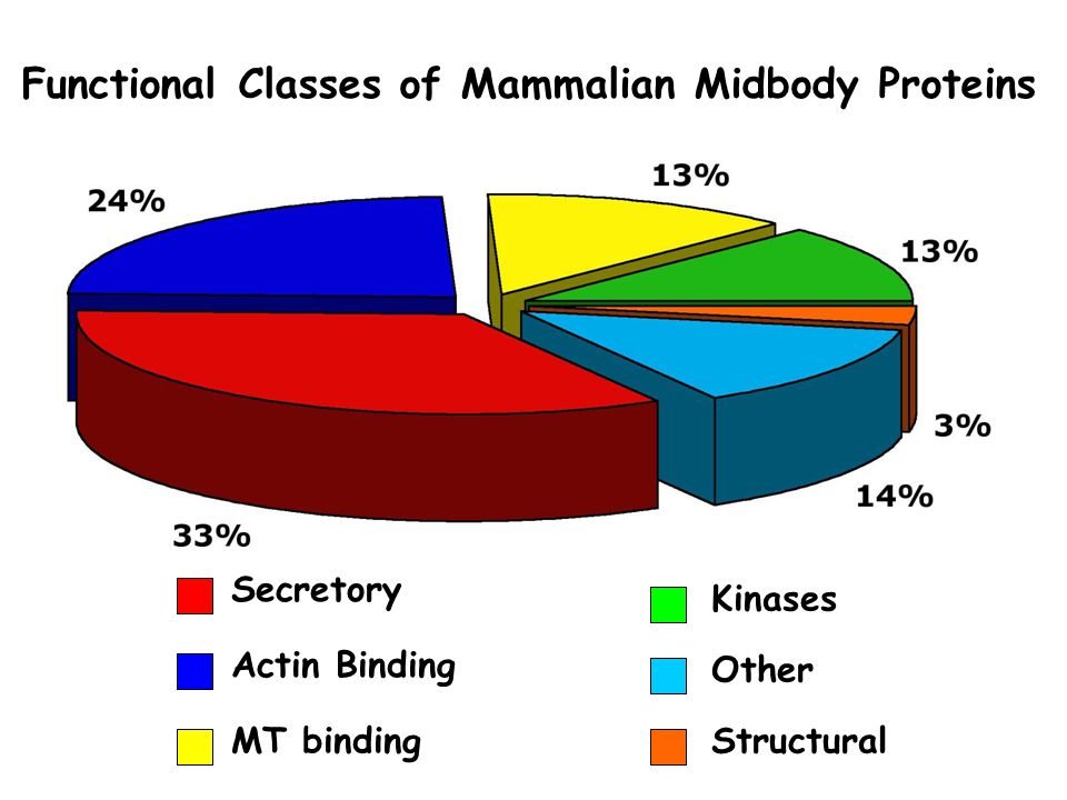 Functional Classes of Mammalian Midbody Proteins