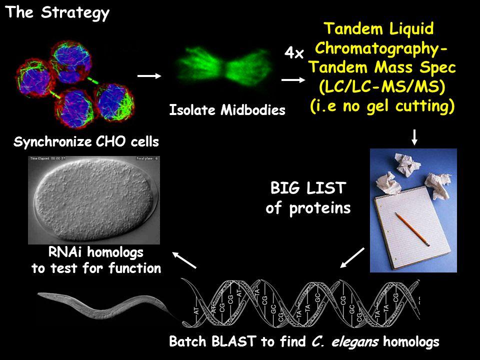 The Strategy Tandem Liquid Chromatography- Tandem Mass Spec 4x