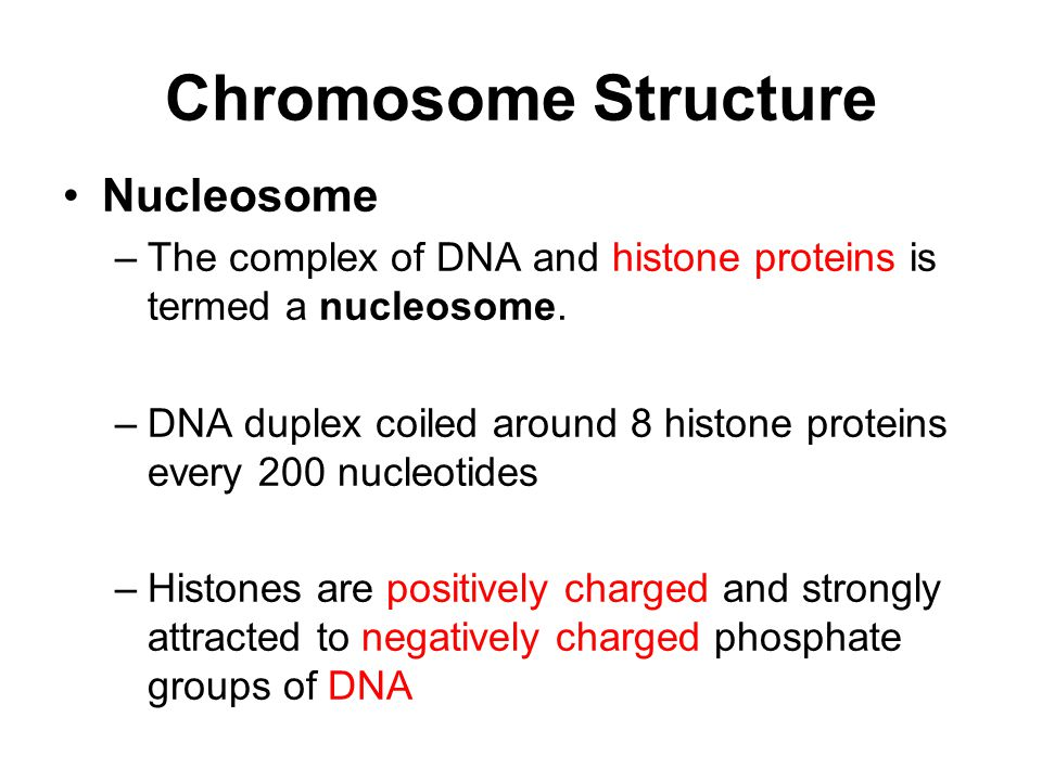 Chromosome Structure Nucleosome