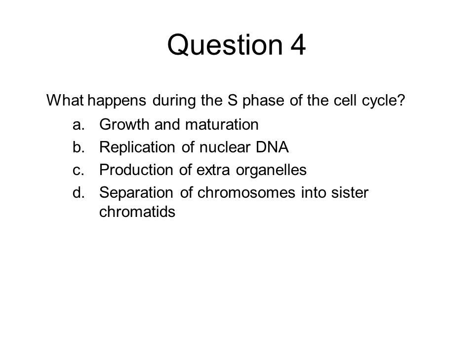 Question 4 What happens during the S phase of the cell cycle