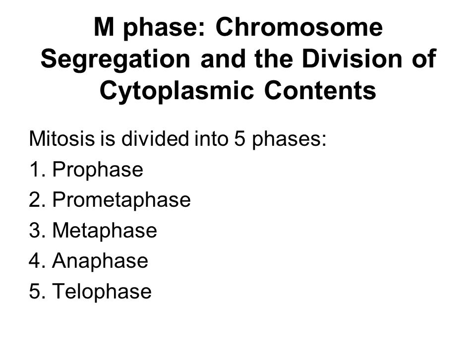 M phase: Chromosome Segregation and the Division of Cytoplasmic Contents