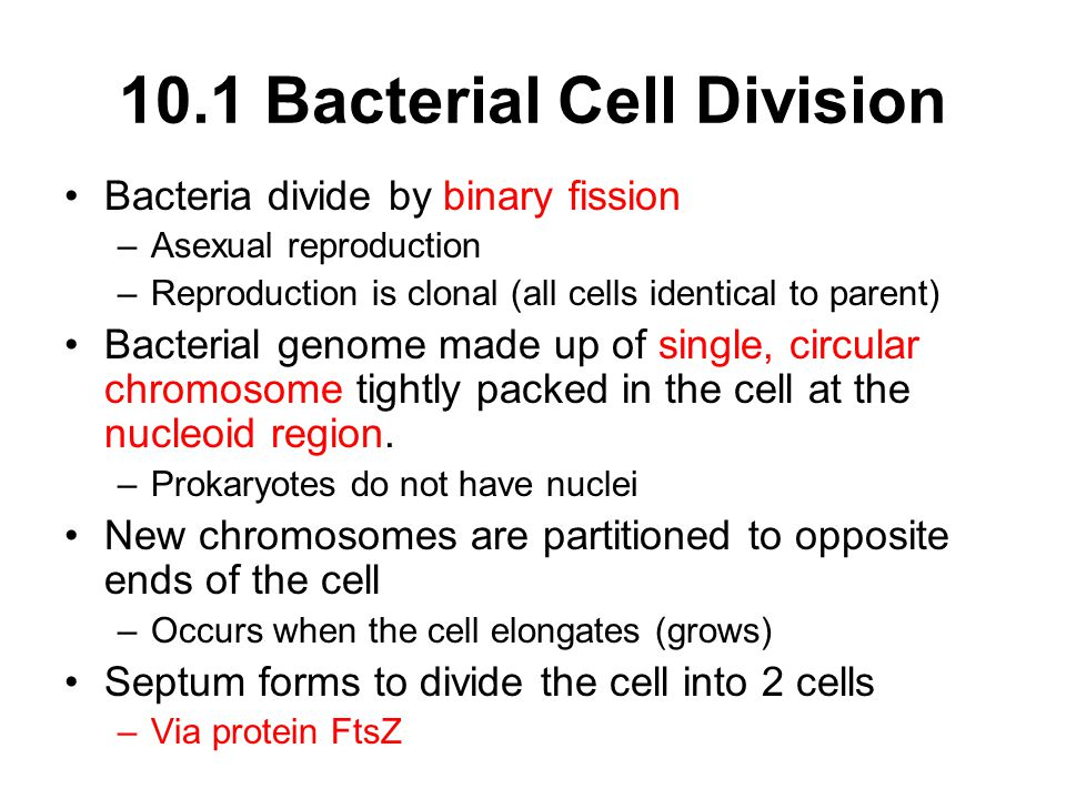 10.1 Bacterial Cell Division