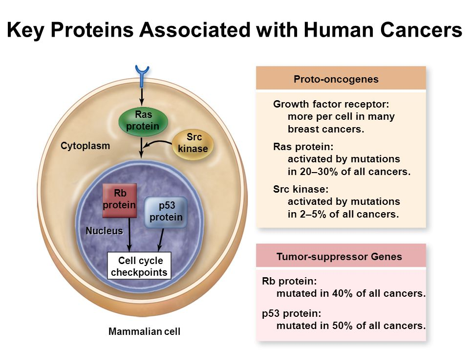 Key Proteins Associated with Human Cancers