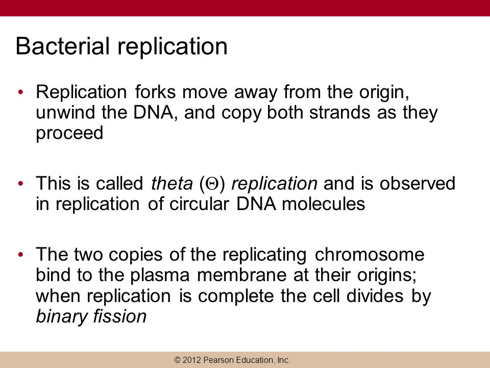 Bacterial replication