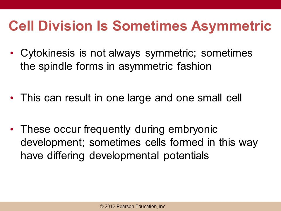 Cell Division Is Sometimes Asymmetric