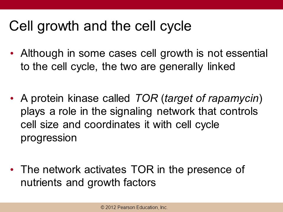 Cell growth and the cell cycle