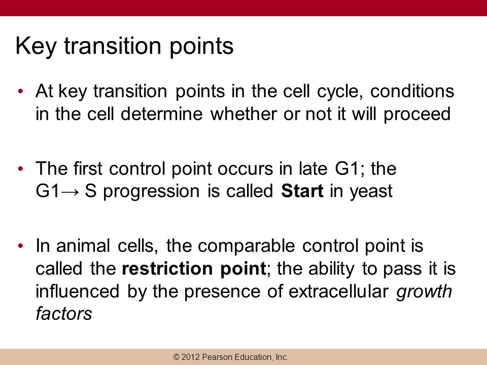 Key transition points At key transition points in the cell cycle, conditions in the cell determine whether or not it will proceed.