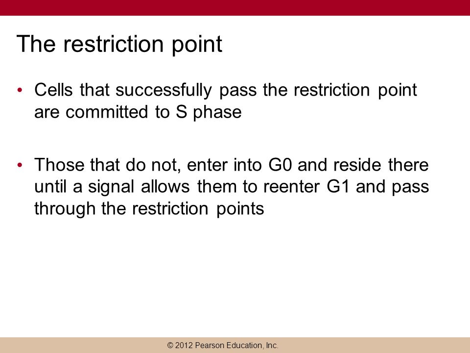 The restriction point Cells that successfully pass the restriction point are committed to S phase.