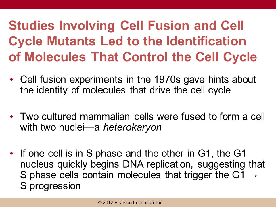 Studies Involving Cell Fusion and Cell Cycle Mutants Led to the Identification of Molecules That Control the Cell Cycle
