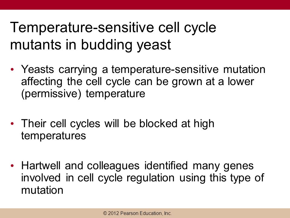 Temperature-sensitive cell cycle mutants in budding yeast