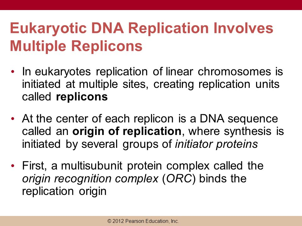 Eukaryotic DNA Replication Involves Multiple Replicons