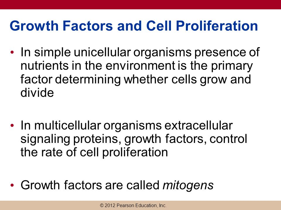 Growth Factors and Cell Proliferation