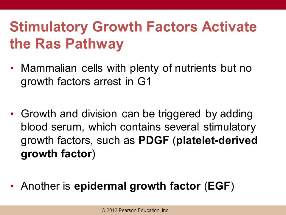 Stimulatory Growth Factors Activate the Ras Pathway