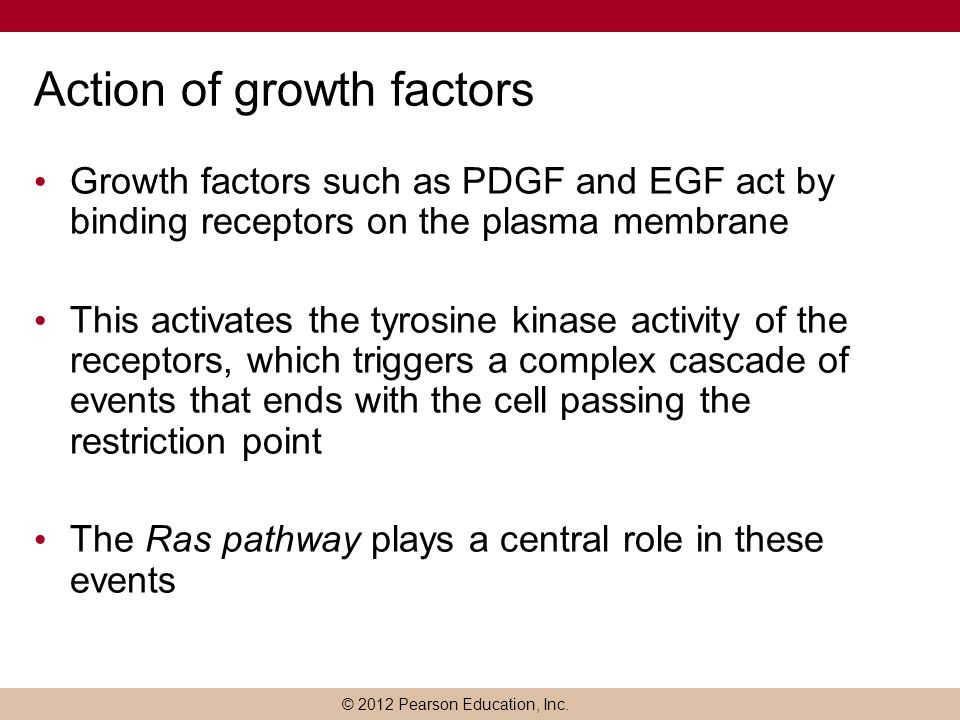Action of growth factors