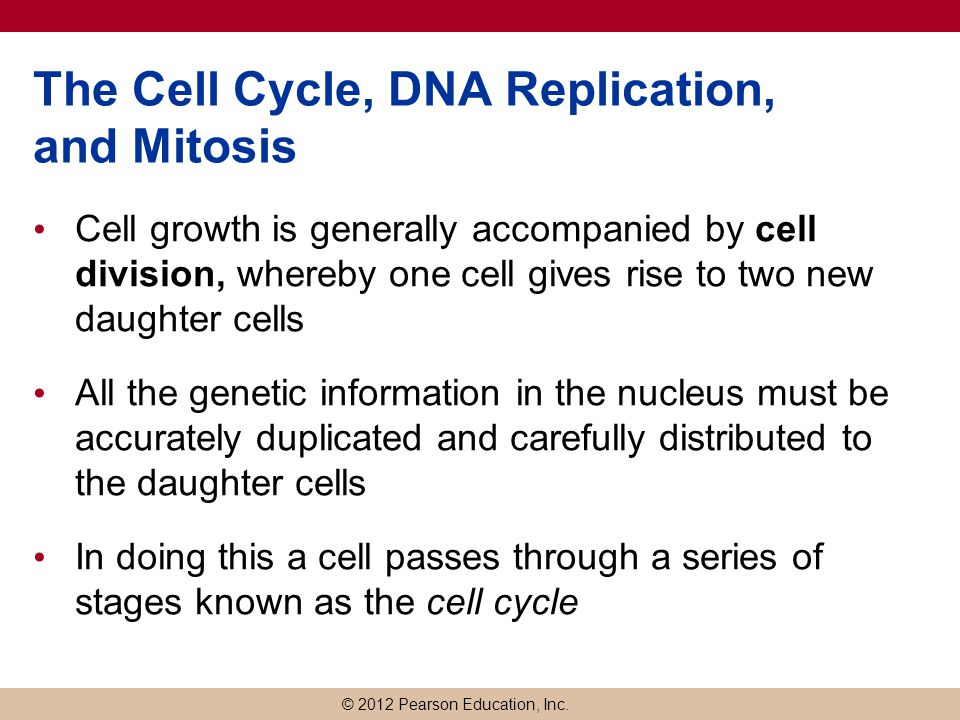 The Cell Cycle, DNA Replication, and Mitosis