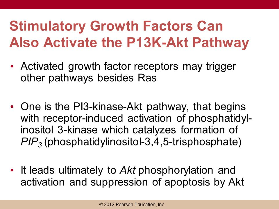 Stimulatory Growth Factors Can Also Activate the P13K-Akt Pathway