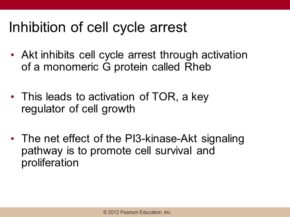 Inhibition of cell cycle arrest