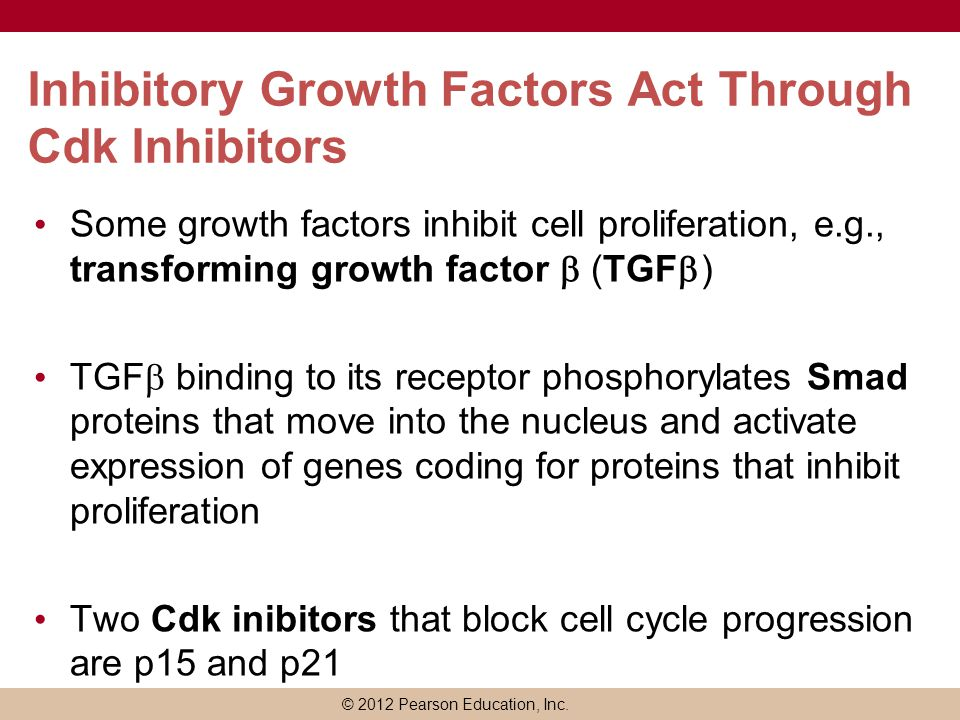 Inhibitory Growth Factors Act Through Cdk Inhibitors