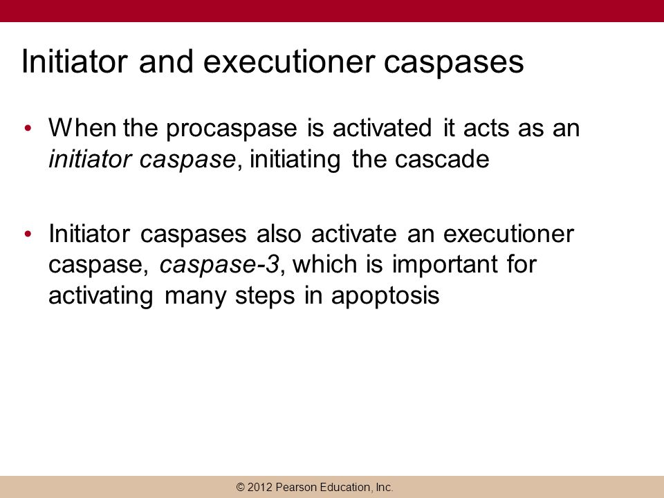 Initiator and executioner caspases