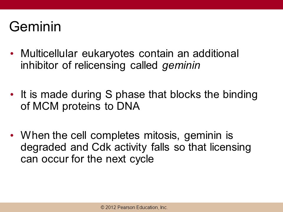 Geminin Multicellular eukaryotes contain an additional inhibitor of relicensing called geminin.