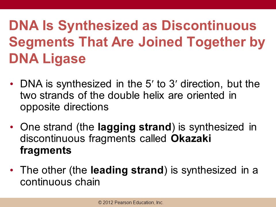 DNA Is Synthesized as Discontinuous Segments That Are Joined Together by DNA Ligase