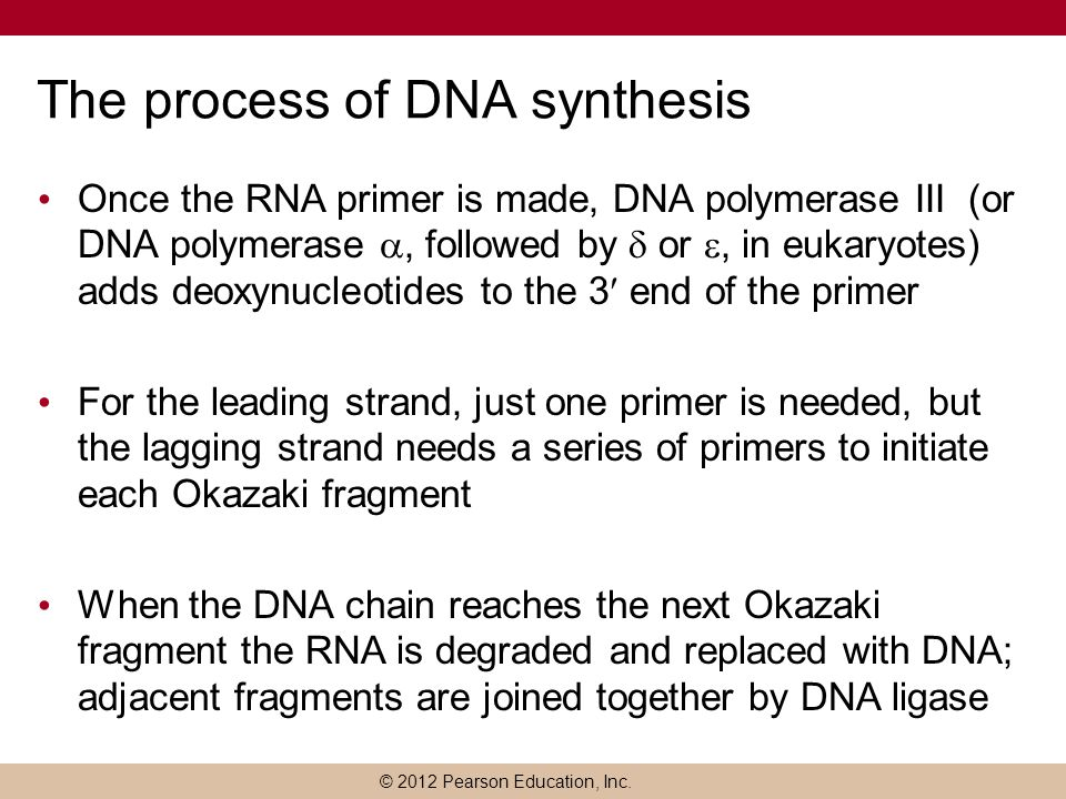 The process of DNA synthesis