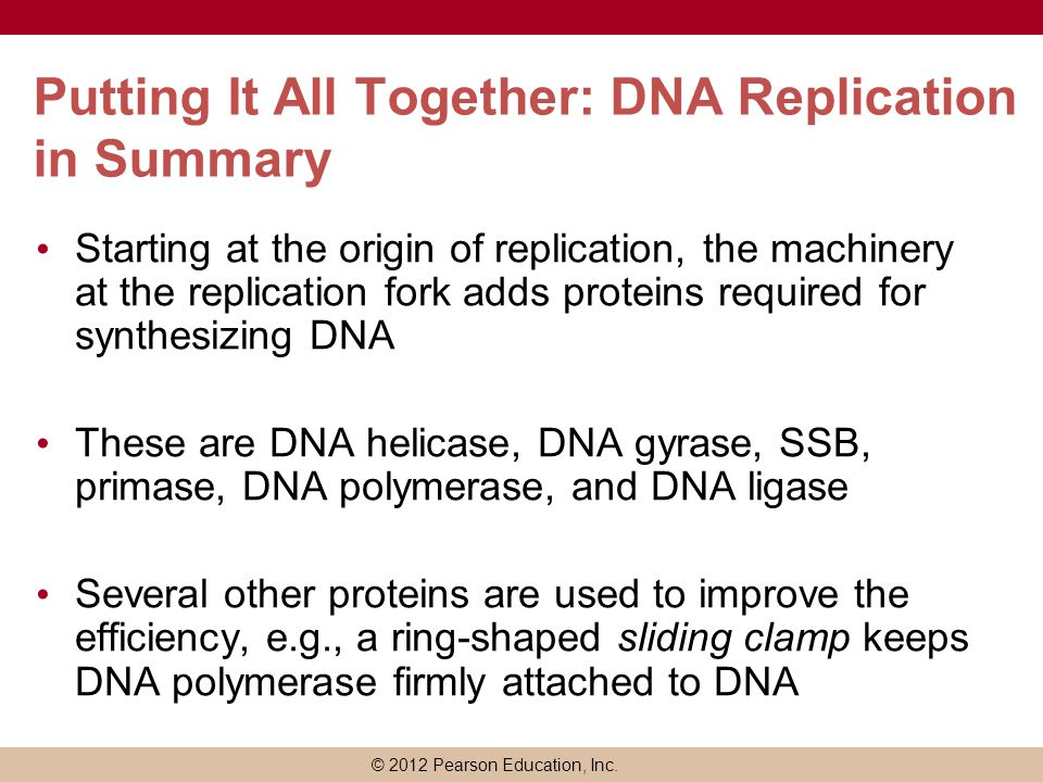 Putting It All Together: DNA Replication in Summary