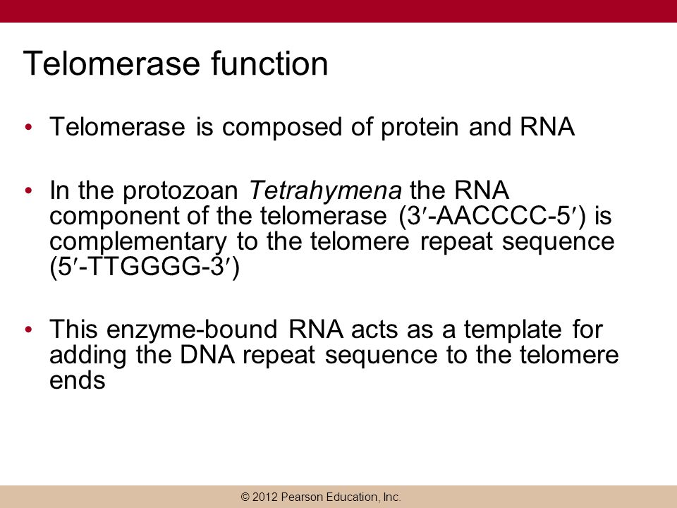 Telomerase function Telomerase is composed of protein and RNA