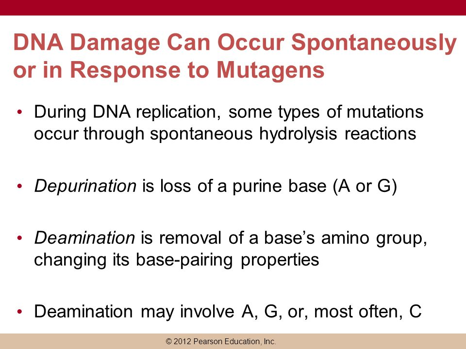 DNA Damage Can Occur Spontaneously or in Response to Mutagens