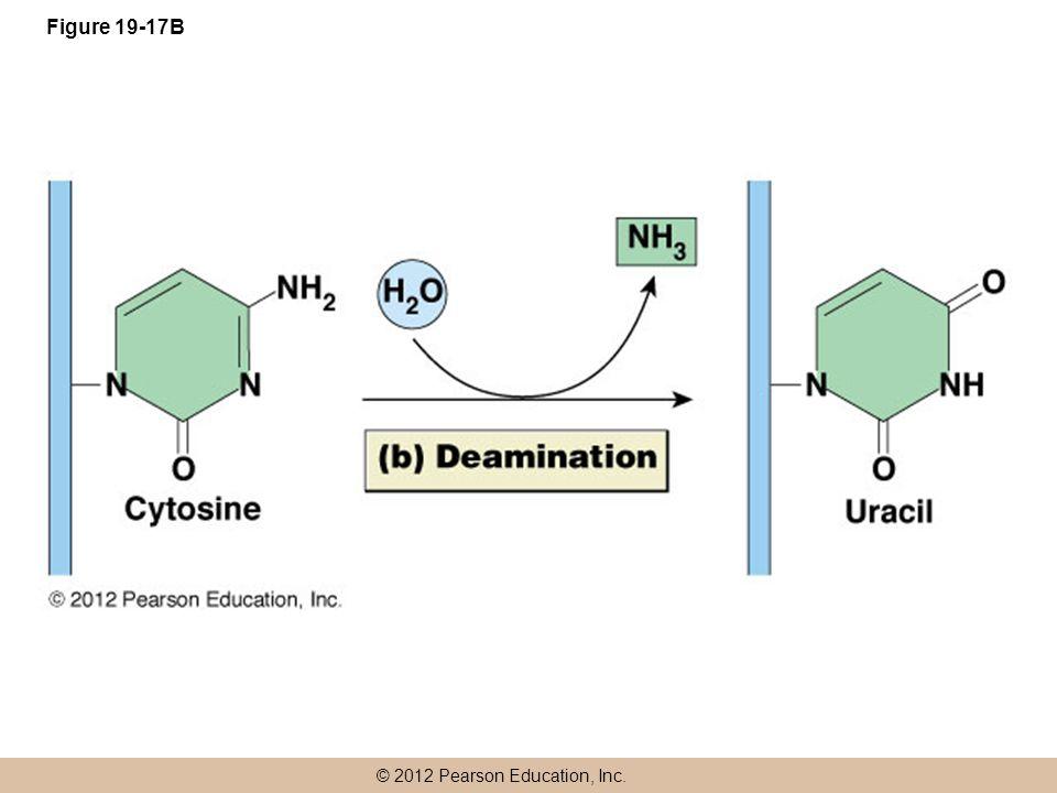 Figure 19-17B